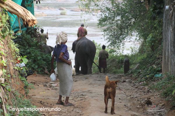 Camino-montañas-Munnar
