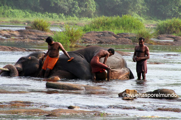 Montañas-Munnar-baño-elefantes