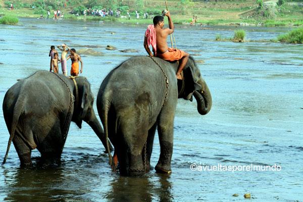 Montañas-Munnar-baño-elefantes2
