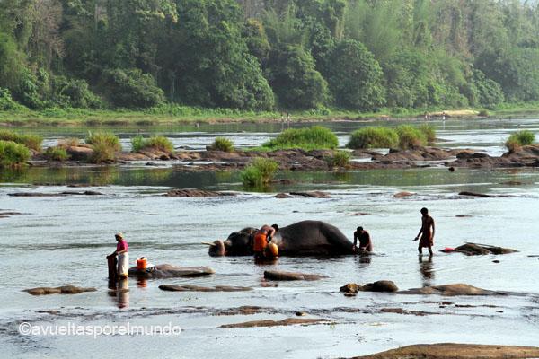 Montañas-Munnar-elefantes